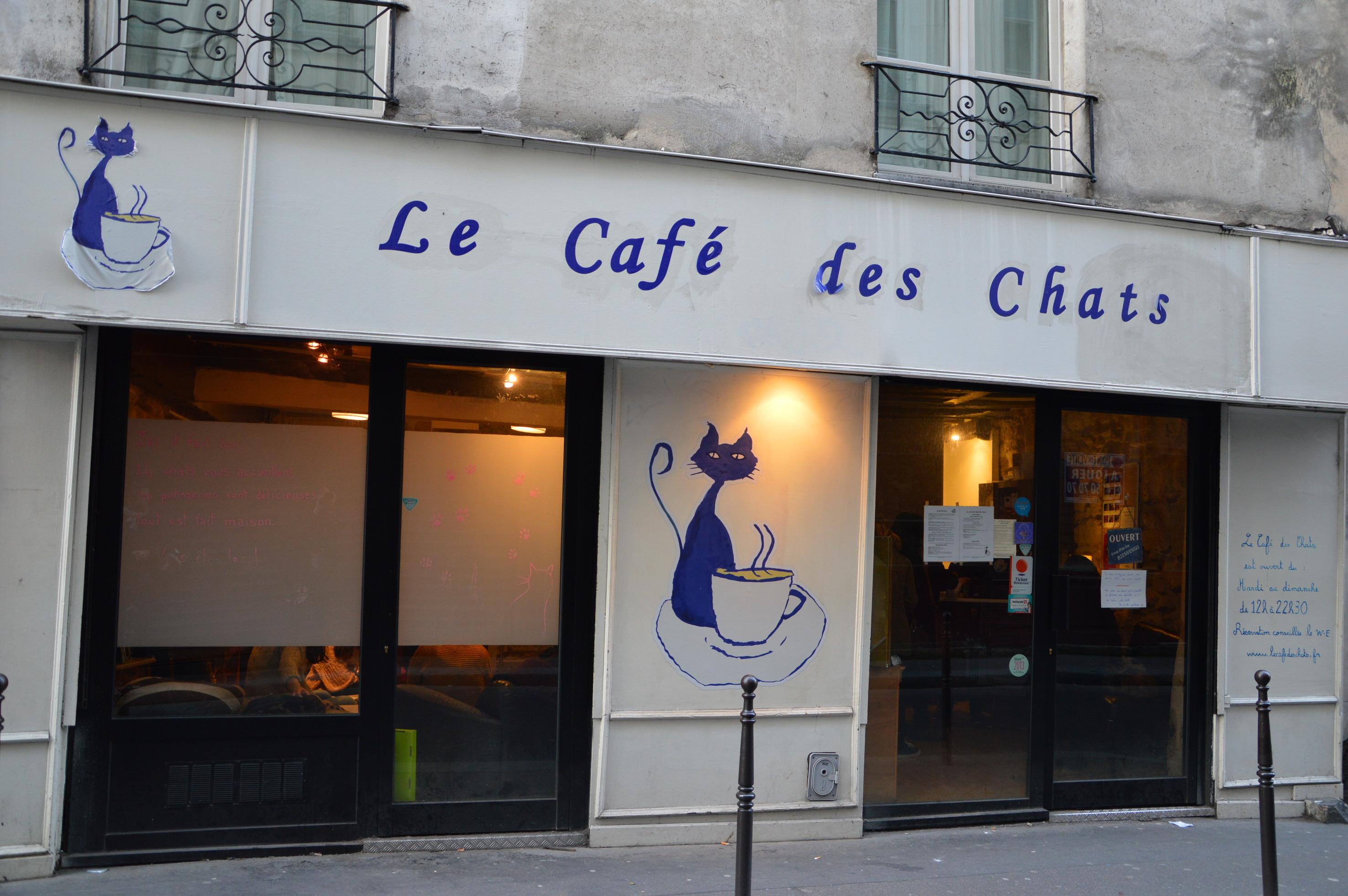 kocia kawiarnia w Paryżu